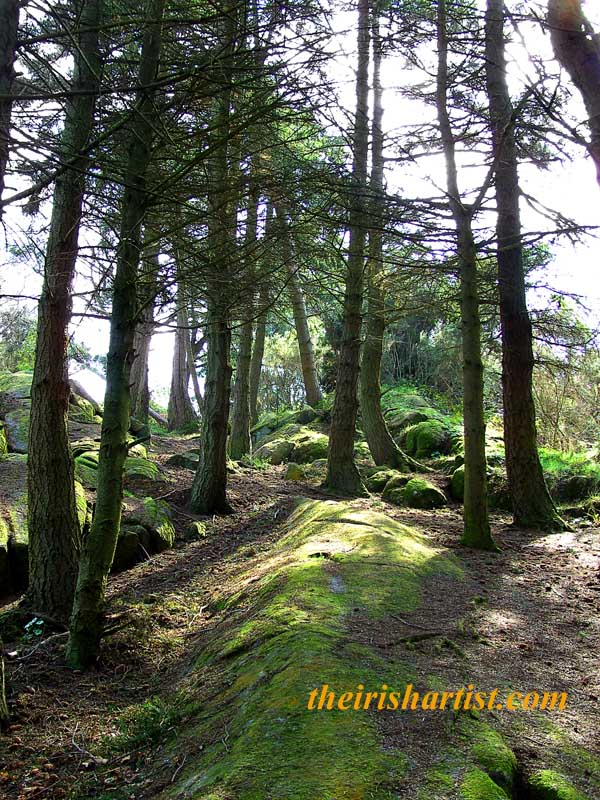 Killiney Hill walk